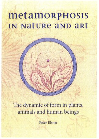 front cover of Metamorphosis in Nature and Art